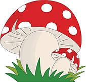 champignon gros