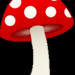 champignonss