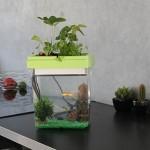 Un aquarium sans besoin d'entretien