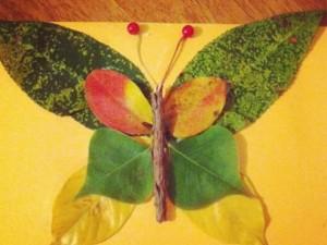 papillon_automnal