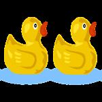 Five little ducks new version (nouvelle version)