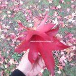 Bouquet de feuilles d'automne