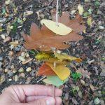 Brochette de feuilles d'automne: Enfilage de feuilles sur un bâton en bois