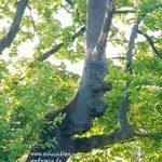 activité d'extérieur pour les enfants:Trouver le visage caché dans l'arbre