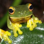 Méditer avec les enfants: Calme et attentif comme une grenouille