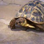 Comment donner à manger à une tortue